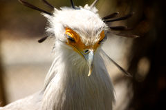 Bird. An interestingly white feathered bird Royalty Free Stock Photos