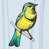Bird. Vector picture. Easy to edit, combine, download and use Royalty Free Stock Images