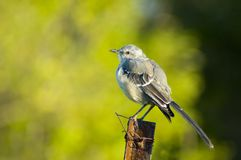 Bird. Standing on a metal post wit out of focus background Stock Photo