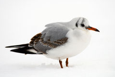Bird. A bird in the winter Stock Photos