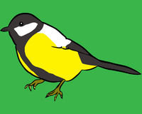 Bird. Vector illustration of a titmouse Royalty Free Stock Photo