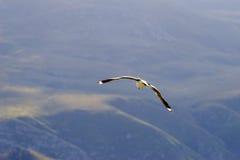 Free Bird 2 Royalty Free Stock Images - 220129