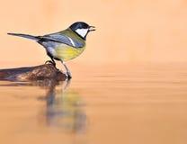 Bird. Royalty Free Stock Photos