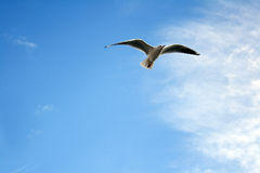 Bird. Soaring High up in the Sky Stock Images