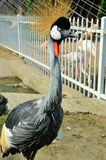 Bird. Big bird on the land in the Zoo, China Royalty Free Stock Photography