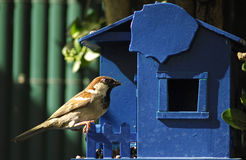Bird. In a blue house Royalty Free Stock Photography