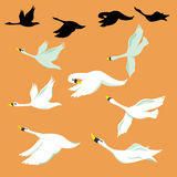 Bird. Animation of birds. birds fly on sky Royalty Free Stock Images