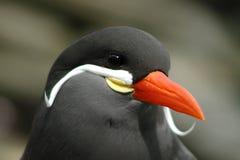 Bird. Sea bird Stock Photo