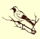Bird. Vector silhouette of the bird on branch Stock Image