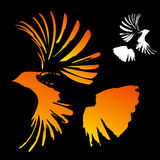 Bird. Vector bird silhouettes On black background Stock Photos