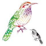 Bird. Beautiful colorful bird pattern on white background Royalty Free Stock Image