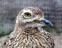 Bird. Closeup shot of a bird Royalty Free Stock Images