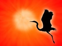 Bird. Silhouette flight against a red sunset royalty free illustration