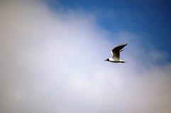 Bird. In the blue sky Royalty Free Stock Photos