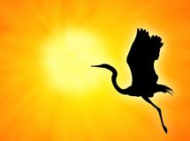Bird. Silhouette flight against an orange sunset royalty free stock images
