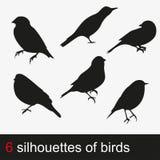 231_bird 向量例证