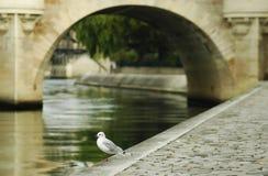 Bird. A bird and a bridge in Paris Royalty Free Stock Photos