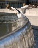 Bird. A bird on a pond swimming Stock Photo