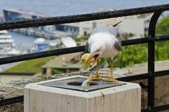 Bird. Bird eats a hamburger. It found a prey in the trash Stock Photography