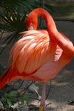 Bird. Flamingo at Riviera Maya, Mexico Royalty Free Stock Photography