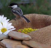 Bird. Flower and stones on natural burlap garden feeder Stock Images