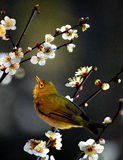 Bird. Singing in the spring