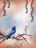The bird. Blue bird on a flowerd branch in a beautiful morning Stock Photography