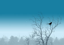 Free Bird Royalty Free Stock Photography - 621607