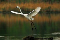 Bird Royalty Free Stock Photography