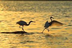 Free Bird Royalty Free Stock Photos - 6467508