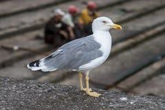 Free Bird Stock Photography - 66291732