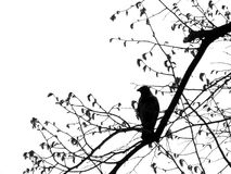 Bird. Black and white - One bird on the tree Royalty Free Stock Photo