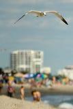 Seagull on beach Stock Image