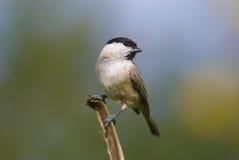 Bird. Little bird on the limb Stock Image