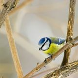 Bird. On a tree, winter/early spring Royalty Free Stock Photography