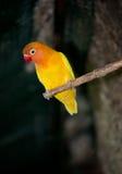 Bird. Small orange bird at a tree branch Royalty Free Stock Photos