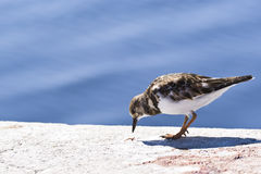 Free Bird About To Eat Royalty Free Stock Images - 13715769