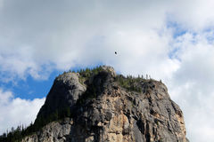 The bird  above the mountain of Altay. Royalty Free Stock Image