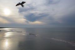 Bird above the sea Royalty Free Stock Image