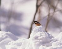 Bird above Snow Stock Photo