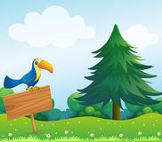 A bird above the wooden empty board Royalty Free Stock Photos