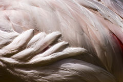 Bird Abstract Background royalty free stock images