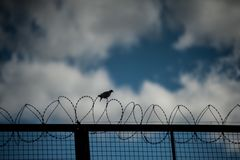 Bird in the wire. A bird alights in a barbed wire during sunset Stock Image