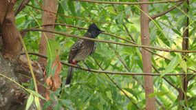 Bird alone on a tree branch royalty free stock image