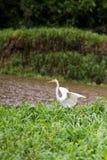 Bird in Amazonian rainforest Stock Photos