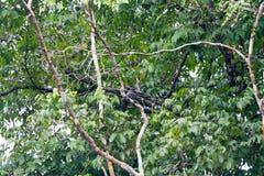 Bird in Amazonian rainforest Royalty Free Stock Photos