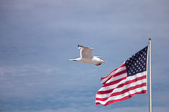 Bird and American Flag Royalty Free Stock Images