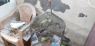 Bird& x27; amor del pirata de s foto de archivo libre de regalías