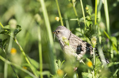 Bird amoungst the weeds Stock Photo