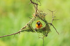Bird And Bird SNest